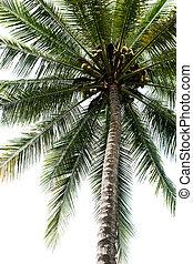 棕櫚, 樹, 被隔离