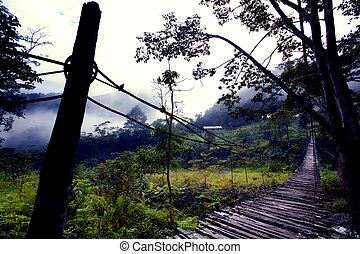 Hanging Bridge Fear - A scary hanging bridge in a tropical...
