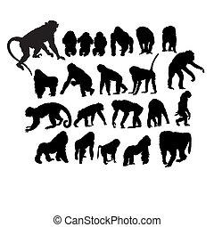 Set of monkeys