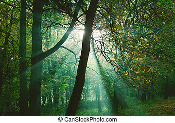 Sun rays between trees in forest - Mystical sun rays between...