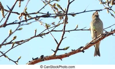 Singer spring. Bird concert.