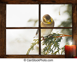 Christmas bird. - Christmas card background. A goldfinch in...