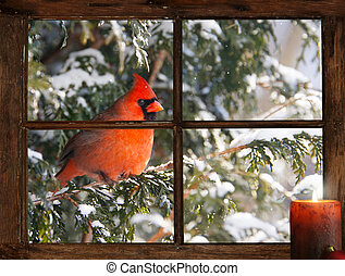 Christmas bird - A male Northern Cardinal in the snow peeks...