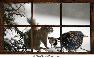 Three animals on a branch - A squirrel, chickadee, and...