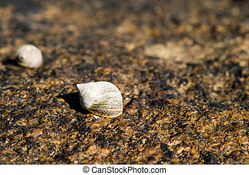 Snail on Rock - A small snail resting on a rock in it\\\'s...