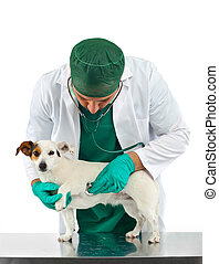 Veterinary esamica the dog's heart on white background