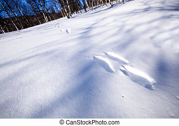 Rabbit Tracks in Snow - Fresh rabbit tracks in snow