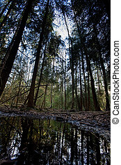 Swamp - A swamp nature image with a water reflection and...