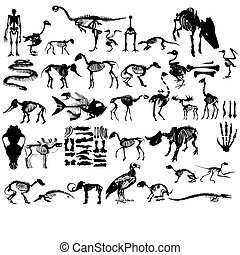 Set of animals skeletons