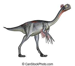 Gigantoraptor dinosaur walking quietly in white background