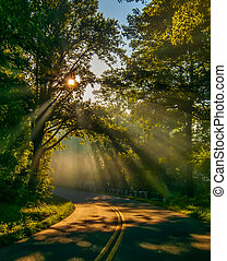 sun rays through trees on road - Road through forest with...