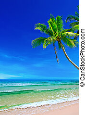 Tropical white sand with palm trees on the beach Koh Kood,...