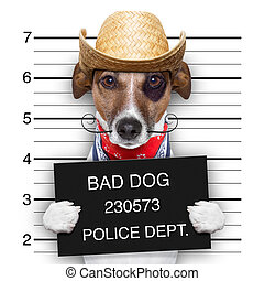 bad mexican dog - mugshot of a mexican very bad dog