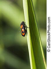 bug - macrophoto
