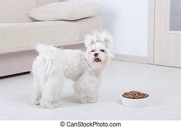 Dog and dry food