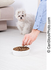Dog with dry food