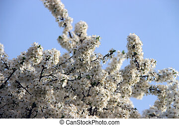 flowering trees on the background of blue sky