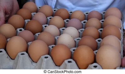 chicken eggs - chickens in a small farm