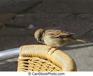 Little bird in the back of a yellow chair