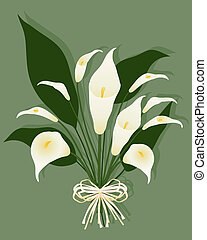 calla lily - an illustration of a bouquet of calla lilies...