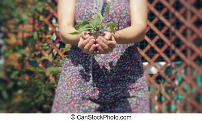Holding New Life. - Woman's Hands Holding New Growth.