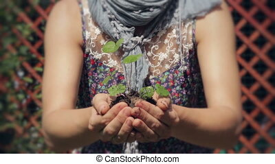 Holding New Life. - A Small Plant in a Woman's Hands.