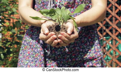 Plant in hands - Young girl holding a green plant in her...