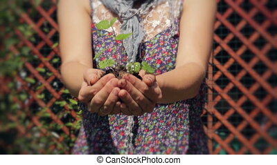 Baby Plant. A New Life. - Woman's Hands holding a small...