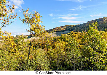 Autumn Trees in Italy - The Cesane forest in the Marche...