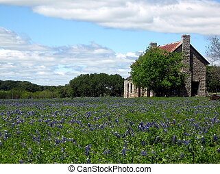 The House at Marble Falls, Tx, in a field of bluebonnets.