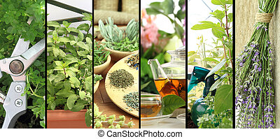 Banners of fresh herbs on balcony garden