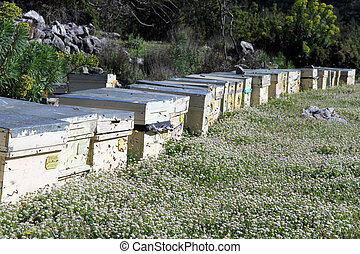 Apiary and beehives in Turkey