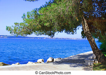 Sea and pine landscape