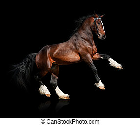 Bay horse isolated on black background.