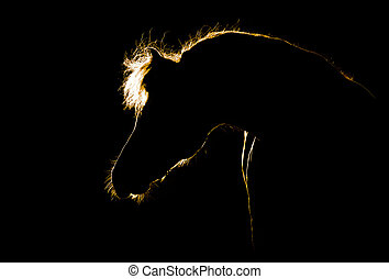 Horse silhouette on black - Horse head silhouette isolated...