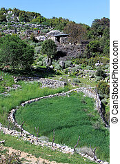 Farm field - Green farm field in Turkey