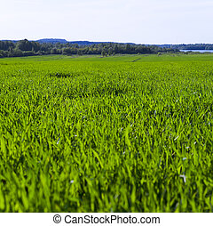 Field - Summer field (2 files stiched together)