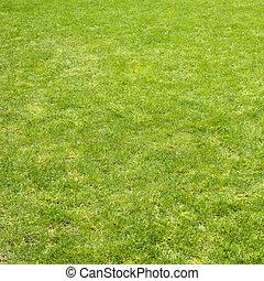 Green grass field - Clean green grass field background as a...