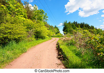 Beautiful spring road