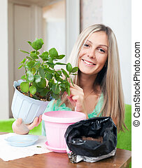 woman transplants potted Kalanchoe flower - Young woman...