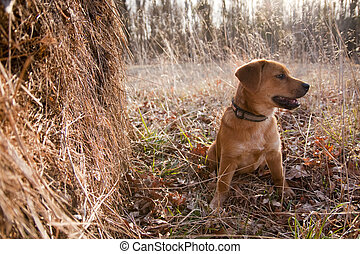 Puppy in a Hayfield - A puppy enjoying his day in a...