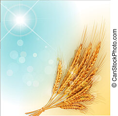gold ears of wheat and sun rays - vector background with...