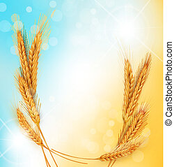 background with gold ears of wheat and sun rays - vector...