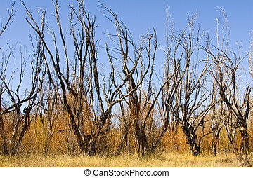 Burnt Trees II