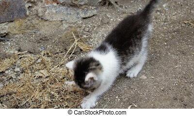 little kitten playing outside