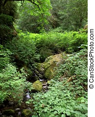 Forest Stream through lush foliage - Stream running through...