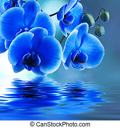 blue orchid background with reflection in water
