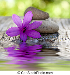 natural flower with stones and water
