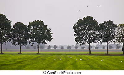 Tree line - Row of Trees in a Green Meadow on a Hazy Morning