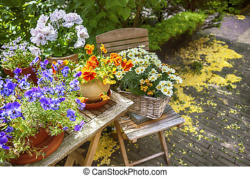 summer flower garden - seasonal image of summer flower...